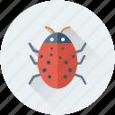 animal, bug, insect, virus, virus bug