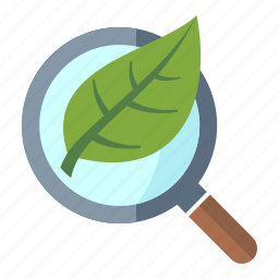 leaf, magnifier, organic seo, search engine icon