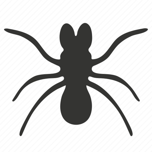 Beetle, bug, insect icon - Download on Iconfinder
