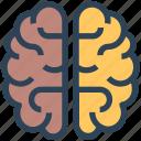 brain, knowledge, mind, seo