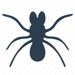 ant, beetle, bug, insect icon
