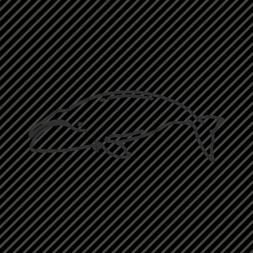arctic whale, balaena mysticetus, bowhead whale, large marine mammal, whale icon