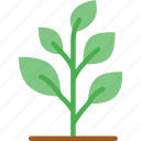 agriculture, farming, garden, nature, plant icon