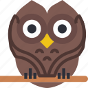 celebration, festivity, halloween, holiday, owl, wise icon