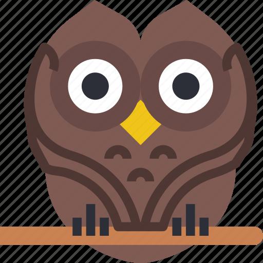 celebration, festivity, halloween, holiday, owl, wise icon