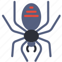 celebration, festivity, halloween, holiday, spider, web icon