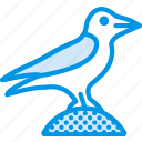 bird, celebration, festivity, halloween, holiday, raven icon
