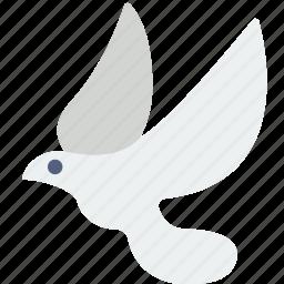 belief, dove, peace, religion, worship icon