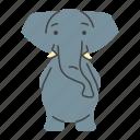 animal, asian, elephant, zoo
