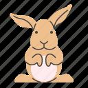 animal, easter, rabbit, zoo icon