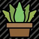 aloevera, farming, gardening, medical, nature, plant