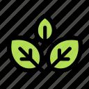 mint, leaf, leaves, plant, nature, herb, green