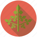 condiment, food, herb, ingredients, parsley, seasoning, spices icon