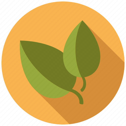 basil, condiment, food, herb, ingredients, leaves, seasoning icon