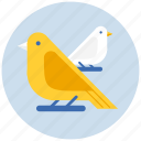 bird, birds icon