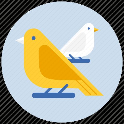 bird, birds icon