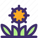 agriculture, farm, flower, garden, nature, plant, sunflower