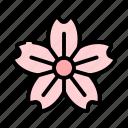 blossom, floral, flower, spring