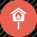 bird, birdhouse, chicken, nest, sparrow, spring