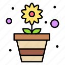 pot, blossom, flora, flower, garden