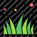 field, grass, lawn, meadow, plant