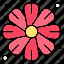 bloom, floral, flower, petal, spring
