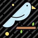 aviary, bird, finch, small, sparrow