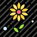 flower, bloom, summer, flowerbeach, plant