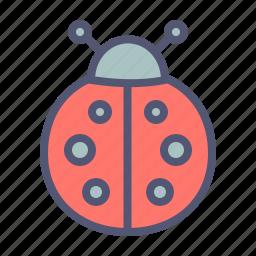 autumn, bug, insect, ladybug, spring icon