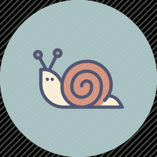 mollusc, shell, slow, sluggish, snail icon