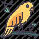 bird, animal, wildlife, nature, pet