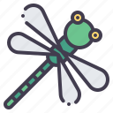 dragonfly, bug, fly, insect, nature