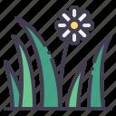 grass, flower, garden, nature, spring