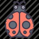 ladybug, bug, insect, spring, beetle