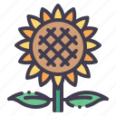 sunflower, flower, nature, plant, garden