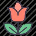 tulip, flower, blossom, bloom, spring