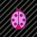 animal, bug, insect, ladybug