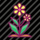 floral, flower, plant, spring