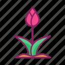 flower, garden, spring, tulip
