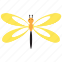 animal, bug, dragonfly, insect, spring