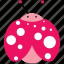 animal, beetle, bug, insect, ladybug, spring