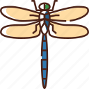 dragonfly, insect, fly, nature, bug, spring, natural