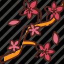 cherry blossom, sakura, flower, sakura festival, japan, spring, sakura blossom