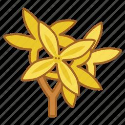 bloom, flower, forsythia, nature, spring icon