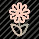 daisy, flower, season, spring, sunflower