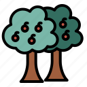 spring, fruit, tree, botanical, nature