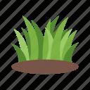 decoration, garden, grass, nature, plant, pot, spring
