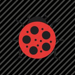 bird, bug, insect, ladybird, ladybug, nature, spring icon