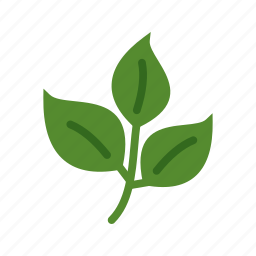 fall, green, leaf, leaves, nature, plant, spring icon