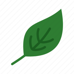 color, fall, green, leaf, leaves, plant, spring icon